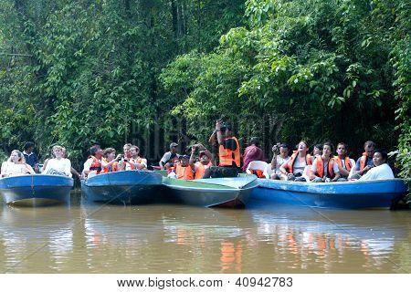 Kinabatangan River Safari