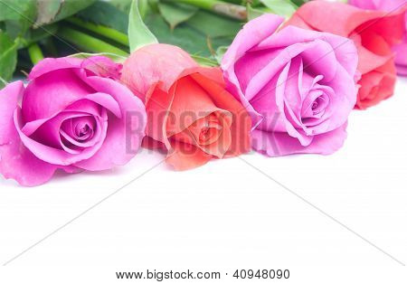 Closeup On Roses