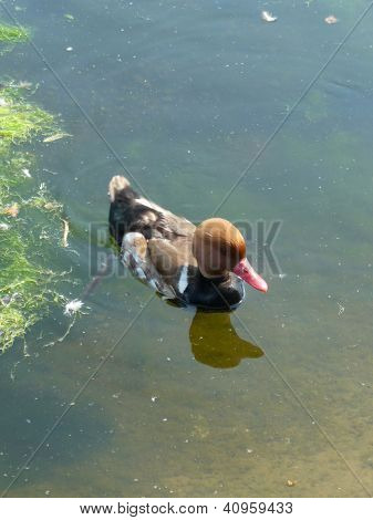 Lake Bird