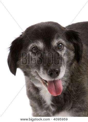 Happy Elderly Dog
