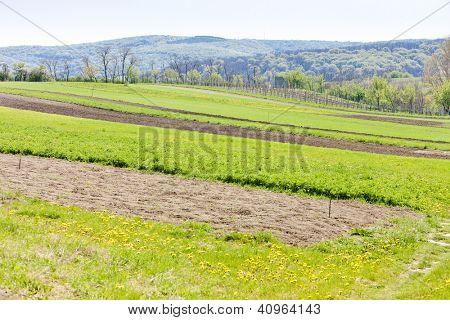 spring landscape with fields in Southern Moravia, Czech Republic