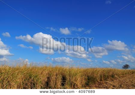 Tall Grass Landscape