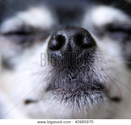 a close up of a dog nose