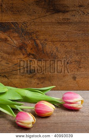 Tulip and wood