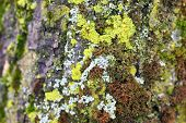 Close-up Of Green Moss And Lichen