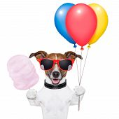 stock photo of candy cotton  - dog with bunch of balloons and cotton candy and shades - JPG