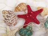 picture of inference  - Seashells and starfish caught in a white fishing net for use as an aquatic inference or decorative background - JPG