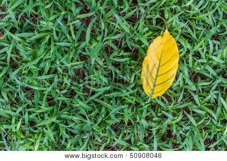 Leaves Yellow Falingl On The Sward