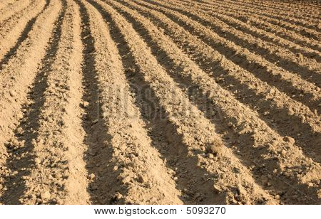 Ploughed Agricultural Field