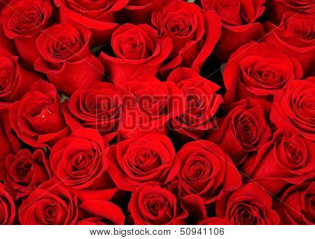 beautiful bouquet of red roses as a holiday background