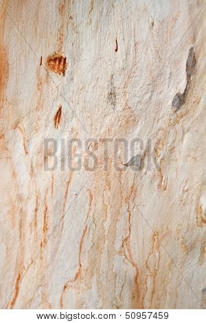 sycamore tree texture background pattern
