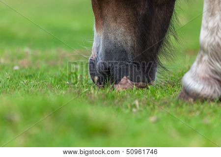 Horse�s mouth