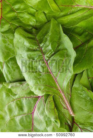 Mangold Leaves