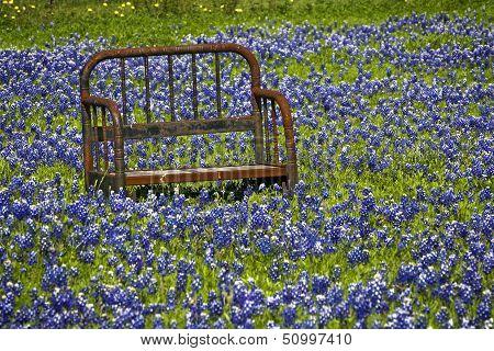 Bench In Bluebonnets