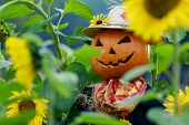 picture of scarecrow  - Scarecrow in the garden  - JPG
