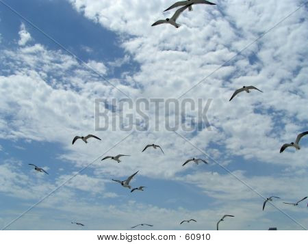 Seagulls In Flight 2