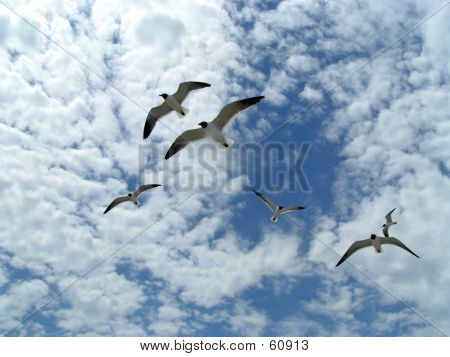 Seagulls In Flight 5