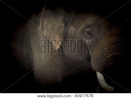 Elephant Low Key