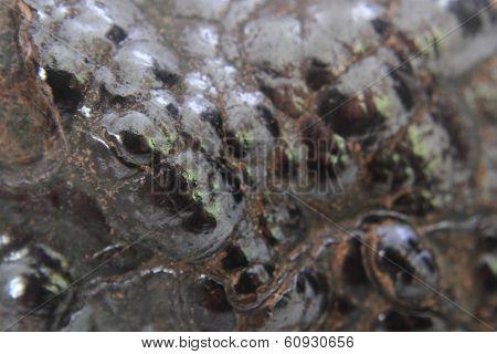 Natural Hematite Texture