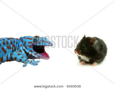 Hamster And  Lizard