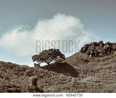 Single tree and shed, hilly landscape, split toning effect