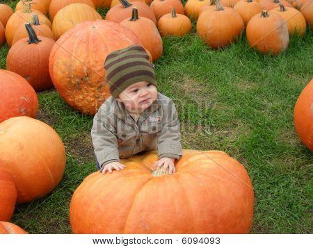 Baby boy in a pumpkin field