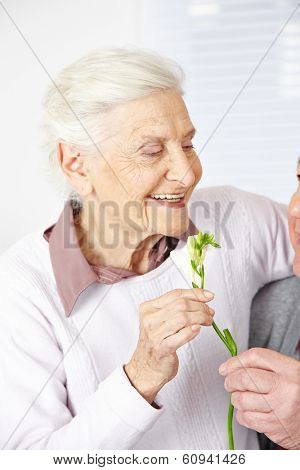 Old man offering smiling senior woman Freesia flowers
