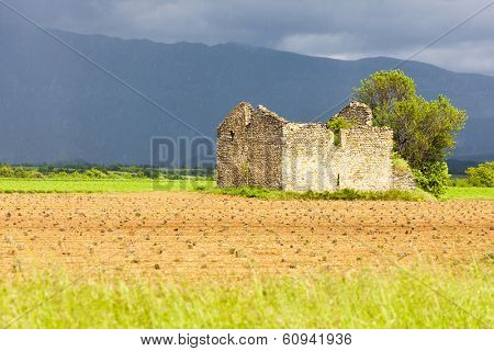 field with a ruin of house and tree, Plateau de Valensole, Provence, France