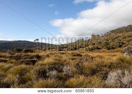 Button grass plains