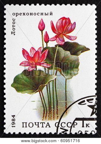 Postage Stamp Russia 1984 Lotus, Aquatic Plant