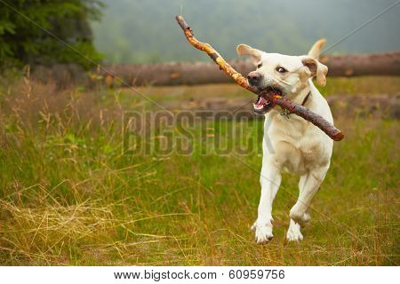 Dog With Stick