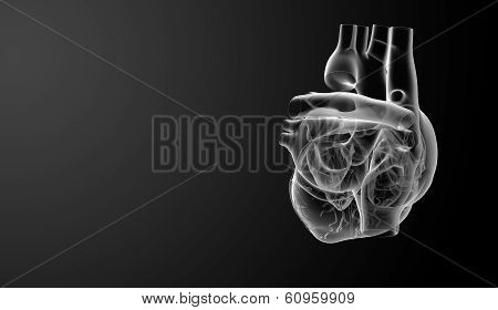 3d render illustration of the Heart