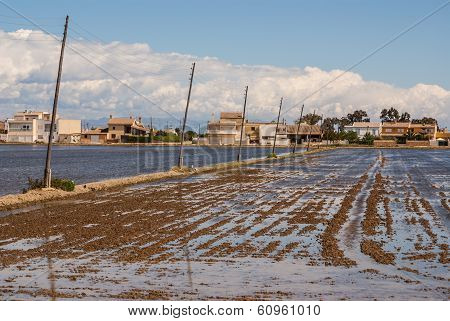 View Of A Paddy Field In Delta De L'ebre, Catalonia, Spain