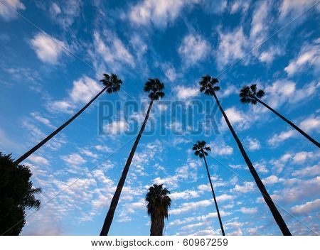 Palm trees against clouds over blue sky background.
