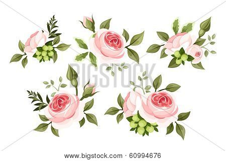 Set of pink roses. Vector illustration.