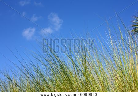 Everglades Grass Against Blue Sky