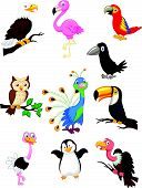 pic of flamingo  - Vector illustration of Bird cartoon collection isolated on white background - JPG