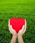 Red heart in hands on the green grass