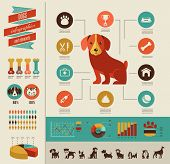 Dogs infographics - vector illustration and icon set poster
