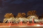 Illuminated Palm Trees In The City