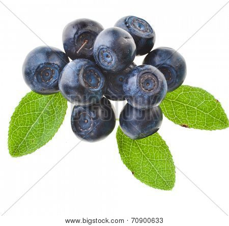 blueberries plant isolated on white background