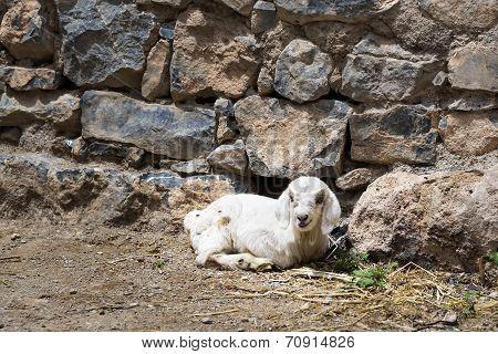 Lamb Saiq Plateau