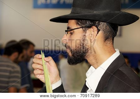 BNEY-BRAK, ISRAEL - SEPTEMBER 17, 2013: The young man in black hat with brim and thin glasses carefully considering the branch of myrtle. The traditional holiday bazaar before Sukkot