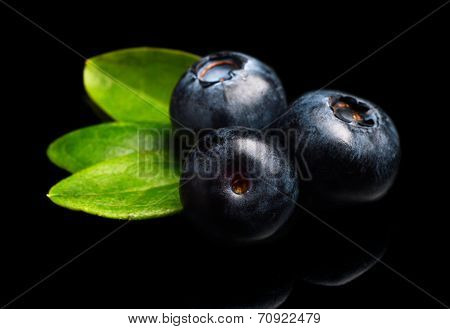 Macro Closeup View Blueberries Leaves Isolated Black
