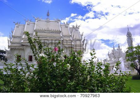Hibiscus Bush With White And Pink Flowers In Wat Rong Khun