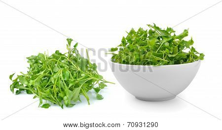 Watercress In Isolated On White Background