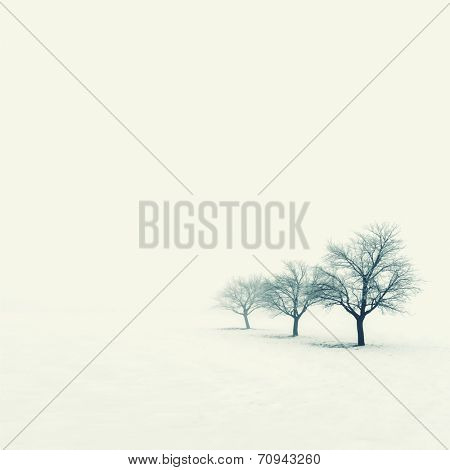 Trees on a foggy winter day