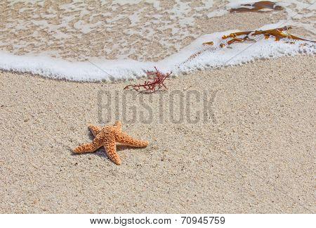 Starfish (sea Star) On Sandy Beach