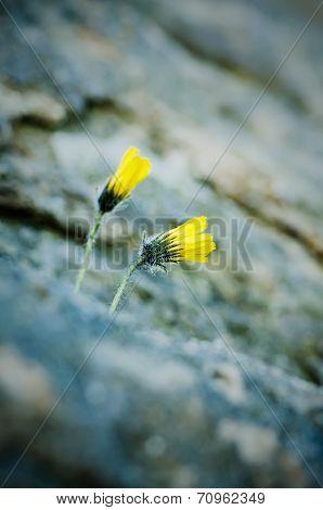 Flowers in rock