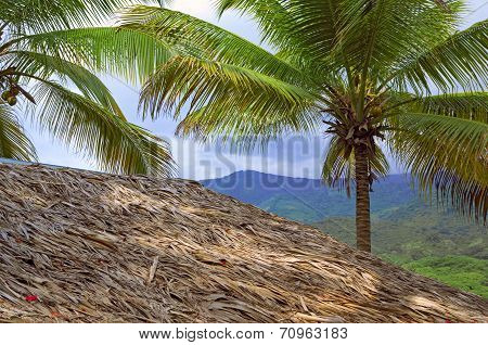 House Under The Thatch Roof And Palmtree With Coconut